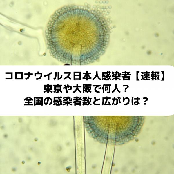 コロナウイルス日本人感染者数の速報は東京で何人?大阪や全国のどこに感染広がる?